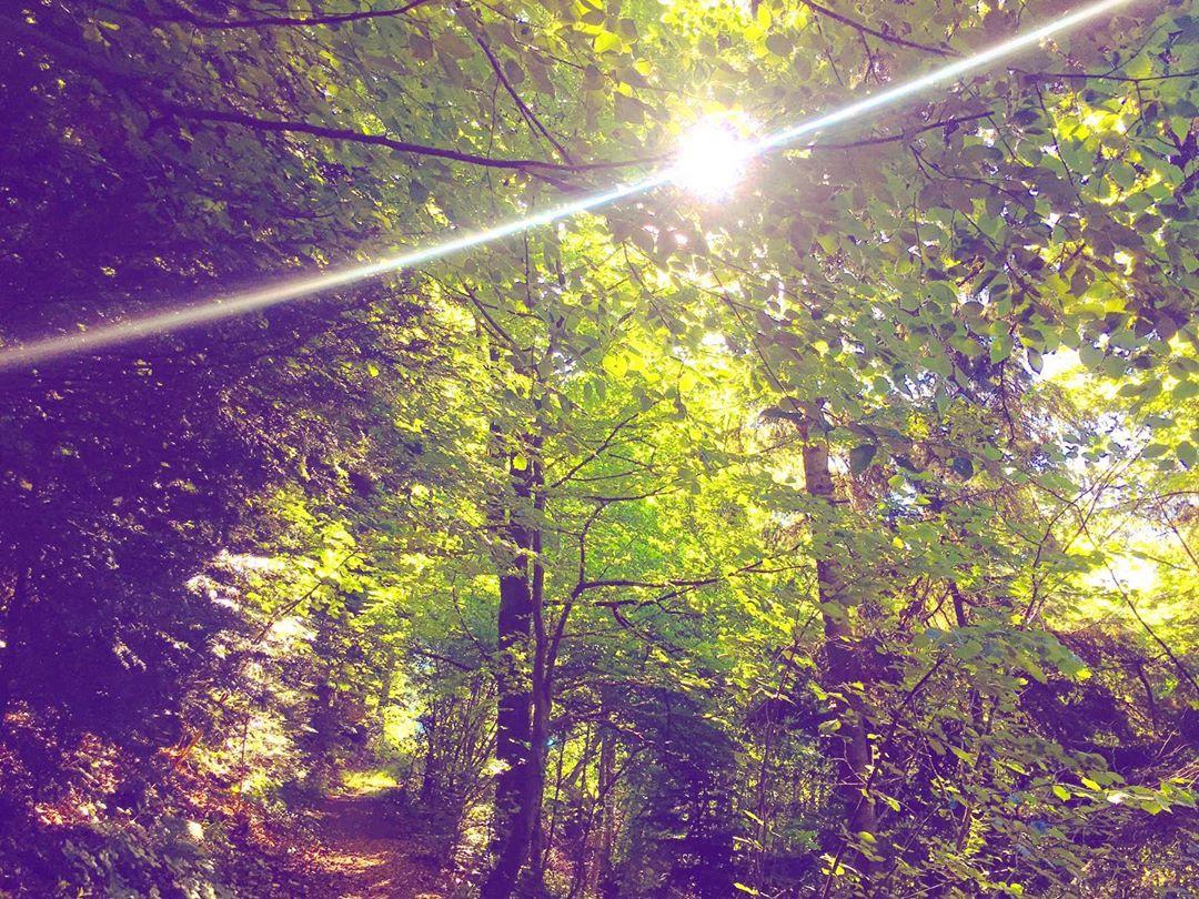 Good Morning Dreisamtal,  erstmal den Jung-Vogel gefüttert und dann mit dem Hund raus. . #earlybird #dreisamtal #kirchzarten #walkingthedog #dogslife #feedthebirds #outdoor #schwarzwald #blackforest #goodmorning